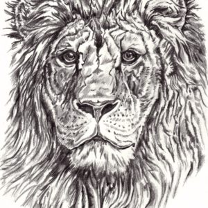 Lion - Black and White Sketch
